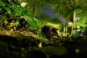 hedgehog - longe exposure by yiehaaa-himself