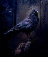 Crow by IrKos