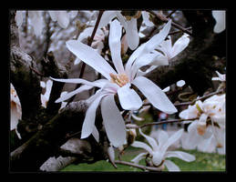 the flower by TearsOfTheNight