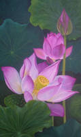 Lotuses II by halupka
