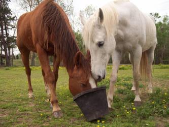Horse 73 by earthtones-photos