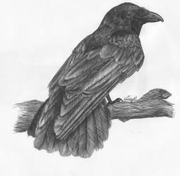 Crow by kkako