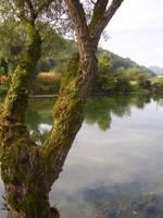 tree river by marlene-stock