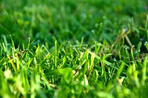 fresh green stock by marlene-stock