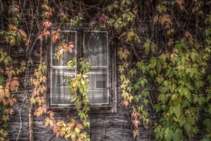 dreamy window by marlene-stock