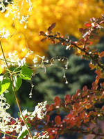 Autumn Lace by gentlegenius