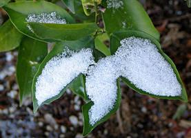 White flakes on green leaves by gentlegenius