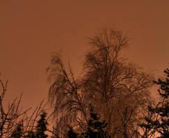 Winter Tree in the City Lights by gentlegenius