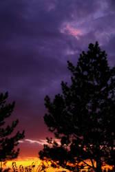 Pine Tree at Sunset by gentlegenius