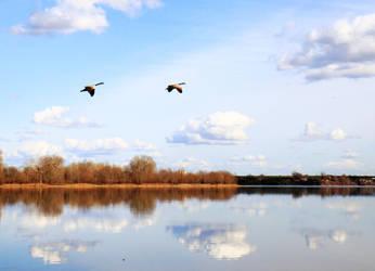 Geese over the river by gentlegenius