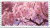 cherry blossoms stamp by heartsickdreams