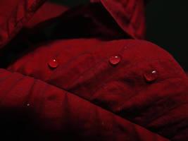 Drops II by daniBlast