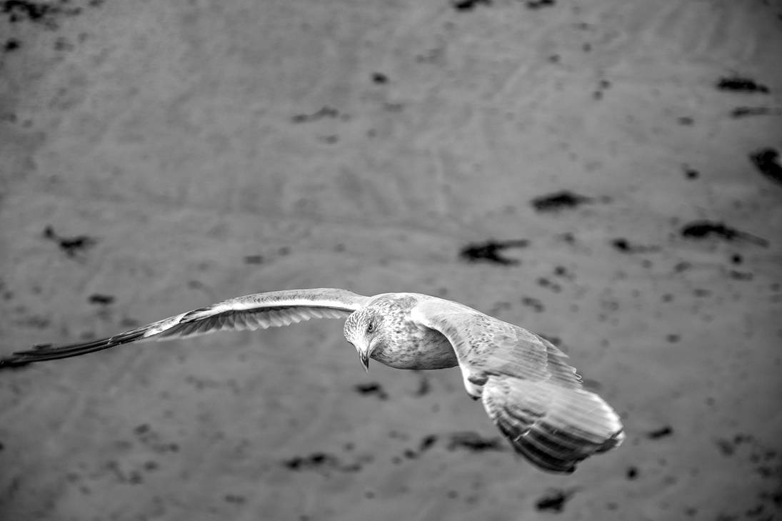 I See You ! by stormbaldur56