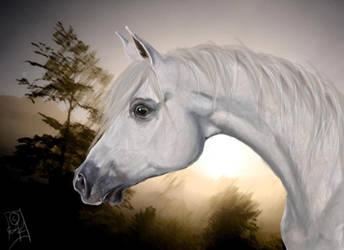 Arabian horse by Viippu