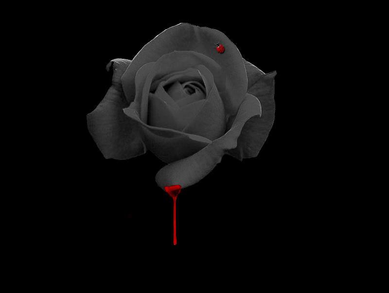 No Love No Pain By Plecks On Deviantart