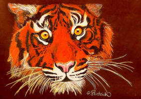 Tiger in Colored Pencil by TikamiHasMoved