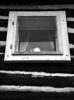Window and the Cup by JanKacar