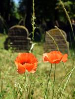 Two Poppy Flower, Two Gravestones by JanKacar