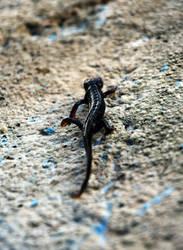Salamander Rising by JanKacar