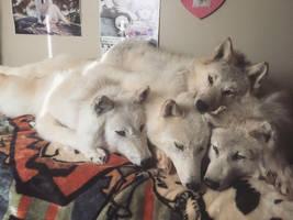 Arctic wolf soft mount pile by ZombiexStrike