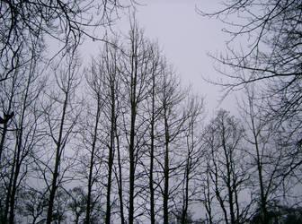 Grey Skies by Mookeynuts