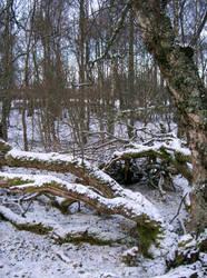 Faeries Wood by Mookeynuts