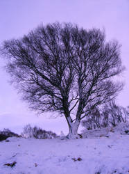 A Tree in the snow by Mookeynuts