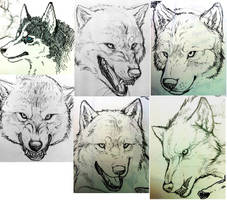 Wolf head sketches by ByoWT1125