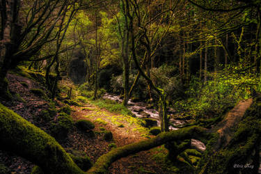 woodland by cprmay