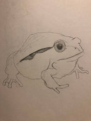 Tomato Frog by charliebear442211