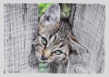 Cat by Ninsianna