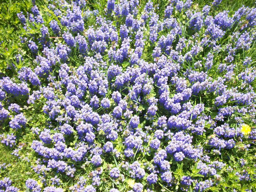 Little Purple Flowers By Artha Stock On Deviantart