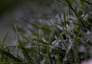 Frosty 3 by KokoPhotography