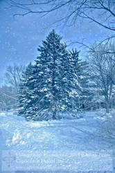 Winter Land by Capricuario