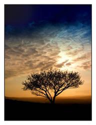 Maroela Tree at Sunrise by kobie