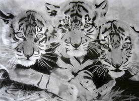 Tiger cubs re-post by ILoveAnimeAndManga
