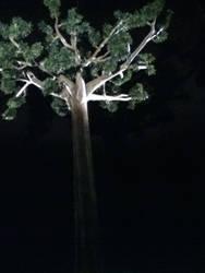 tree in light by Katti1996