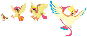 Pidgey, Pidgeotto, Pidgeot and Mega Pidgeot Base by SelenaEde