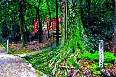 Path to temple in Nara, Nara-ken, Japan by kingtobbe