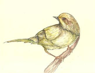 Little bird, fly through my window by Klitamnestra