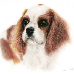 Spaniel Cutie Pies Collection by Benjhons