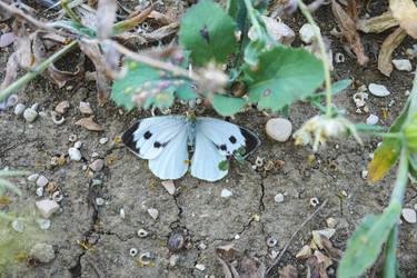 Butterfly by wale97