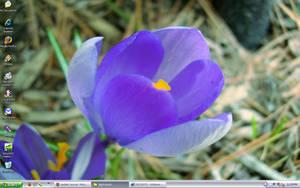 April Flower by Sinneahtes