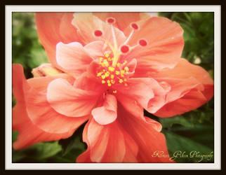 Flower : 1 by kristi-leegibson
