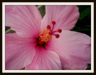 Flower : 2 by kristi-leegibson