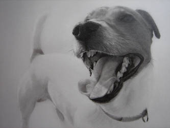 Jack Russell Terrier by Captured-In-Pencil