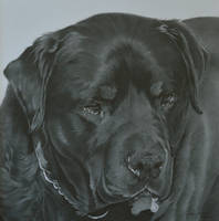 Commission - Rottweiler 'Luther' by Captured-In-Pencil
