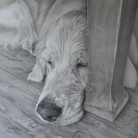 Commission - Golden Retriever 'Bailey' (2) by Captured-In-Pencil