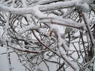 winter came back by edwardburkitt2005