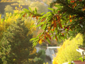 Fall by alphareplay